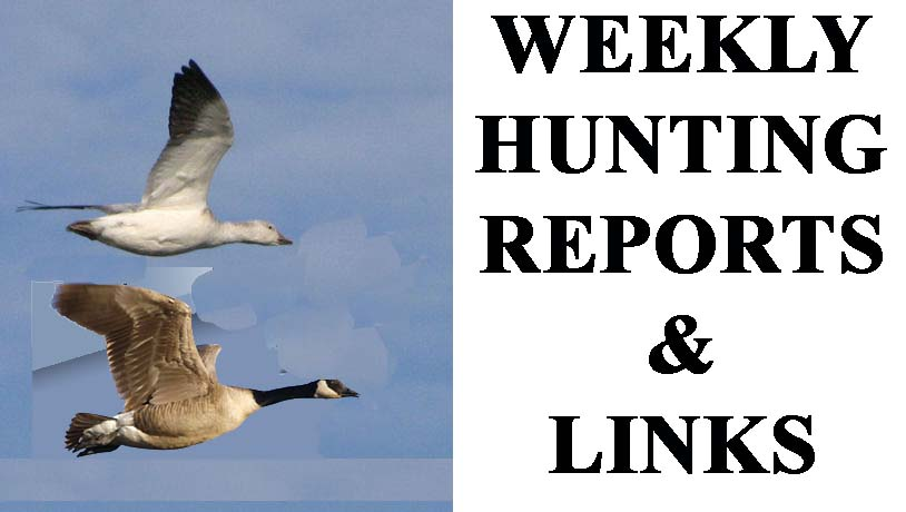duck and goose hunting reports and hunting links