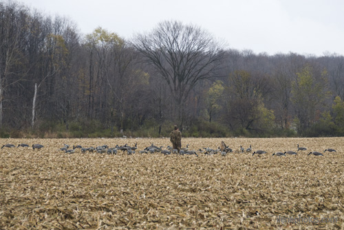 decoy spread